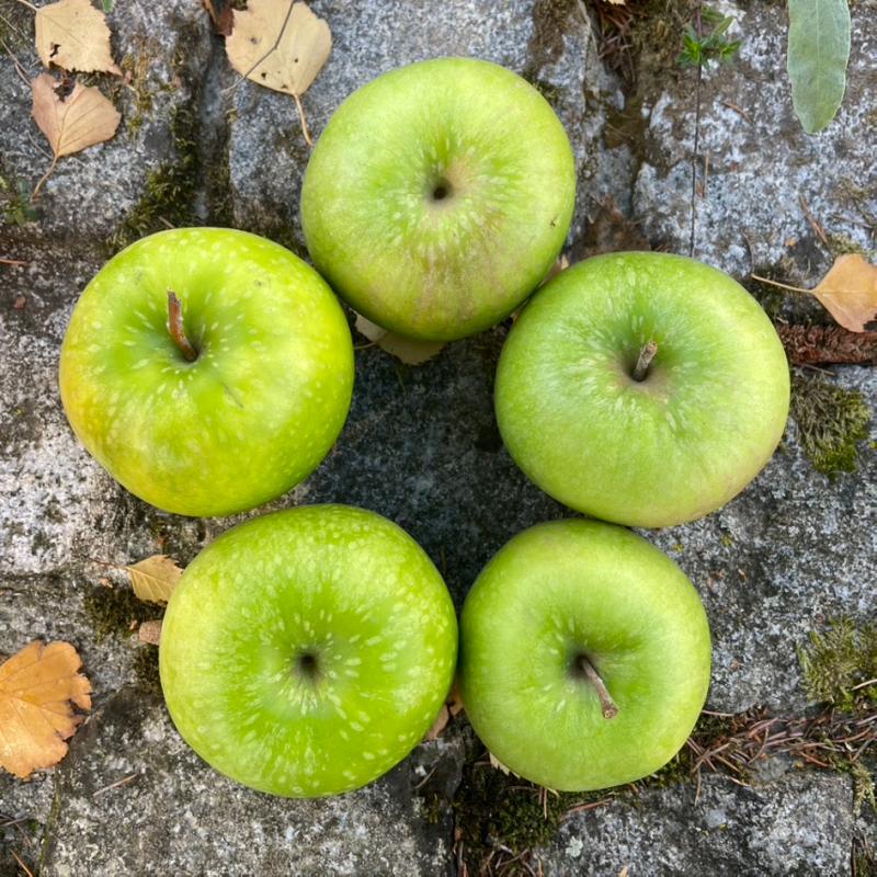 Pomme de terre Agria (GE)