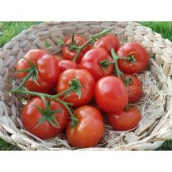 """Tomate """"2ème choix"""""""