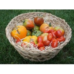 Tomates Plein Terre