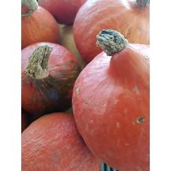 Melon de Cavaillon (France)